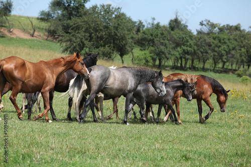 Stado prowadzenia koni