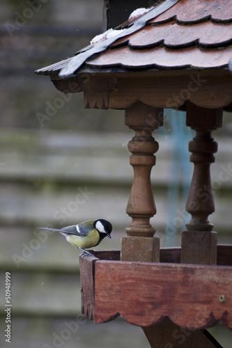Kleine Blaumeise am Vogelhaus