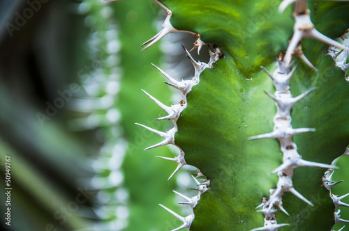 closeup of a cactus with spikes