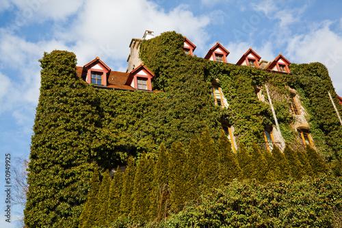 von Ranken überwachsenes Haus in Rothenburg