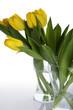 Gelbe Tulpen mit Wassertropfen
