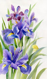 Watercolor Flower Collection: Irises