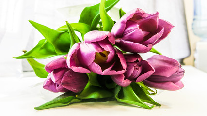 Purple tulips bouquet background