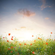 canvas print picture - Wildblumen Wiese