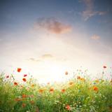 Wildblumen Wiese - 50957162