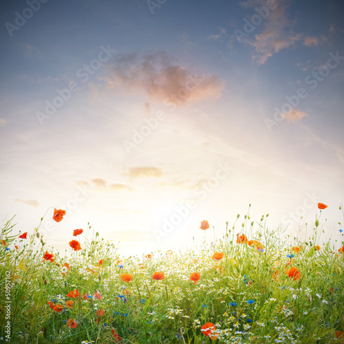 canvas print picture Wildblumen Wiese