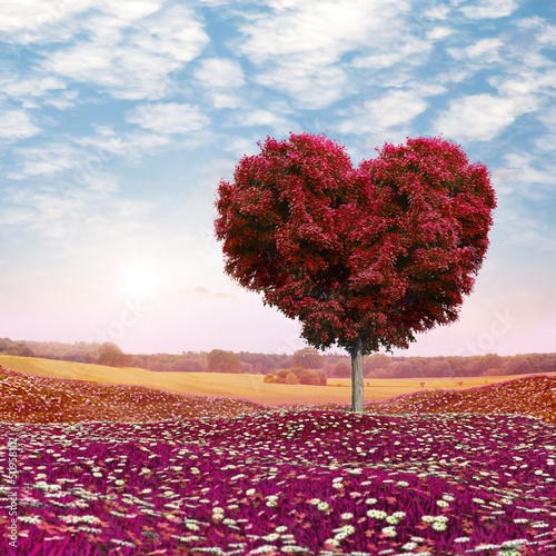 Heart shaped Tree red foliage, valentines day