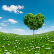 Heart shaped Tree green foliage, love