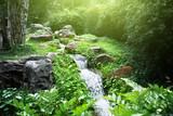 Fototapety river in jungle
