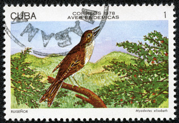 stamp shows Cuban Solitaire (Myadestes elisabeth)