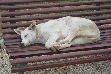 street dog sleeping on a public bench