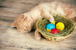 Little cream cat sleeping near the basket with colored eggs