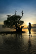 sunset girl silhouette mangrove tree