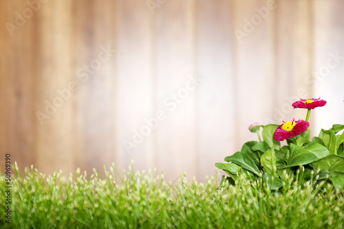 Wooden background and grass