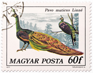 Hungarian postage stamp with male green peafowl