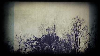 Silhouettes of birch trees, looks scary. Timelapse.