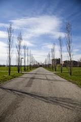 reggio emilia alberi