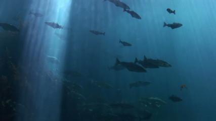 Fish - Marine life - School of fish - Underwater