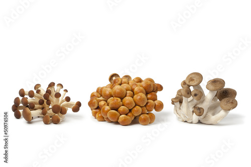 Fresh clusters of Beech mushrooms
