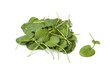 Fresh Barbarea or winte rcress