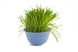 grass  in blue ceramic bowl on white background