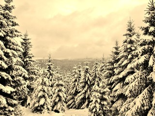 Winterwald in Sepia