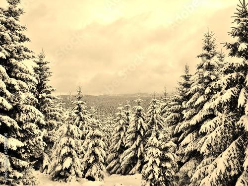 Winterwald in Sepia