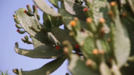 Cactus flower in India