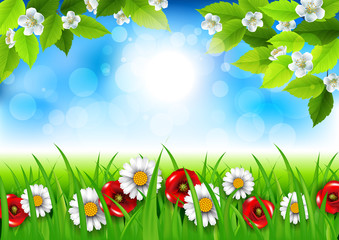 Spring background with daisies and poppies