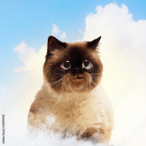 Funny fluffy cat against color background