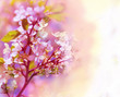 Beautiful spring floral background