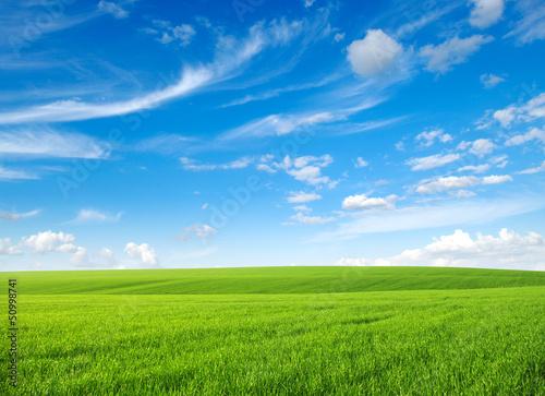 Fototapeten,wiese,grün,gras,landen