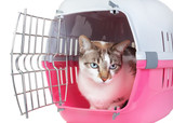 Cute cat sitting home watching from the cell. On a white backgro
