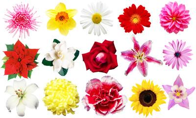clipart fiori