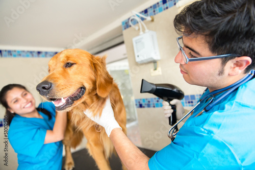 Grooming a dog at the vet