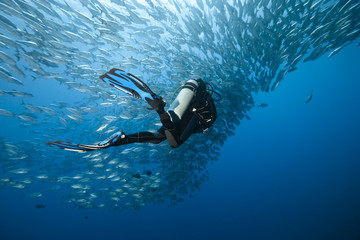 Trevally and diver