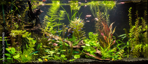 Poster Water planten Ttropical freshwater aquarium with fishes