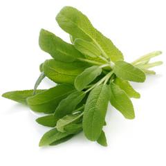 Herb Series - Sage