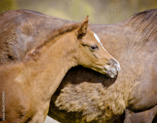 foal close up