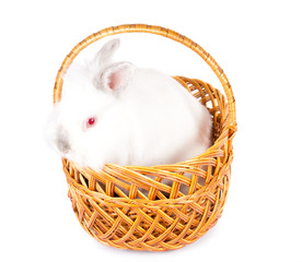 Fluffy white Easter bunny in a basket