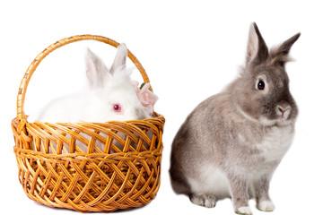 Two adorable pet rabbits