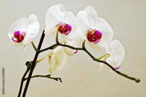 bialy-kwiat