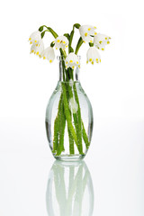 Schneeglöckchen | Frühling | Blumen | Spring |