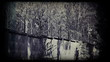 Barbed wire fence. Vintage 8 mm footage.