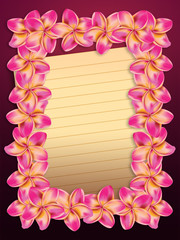 Pink plumeria flowers frame with paper