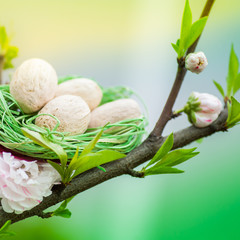 Cherry tree with green nest and eggs