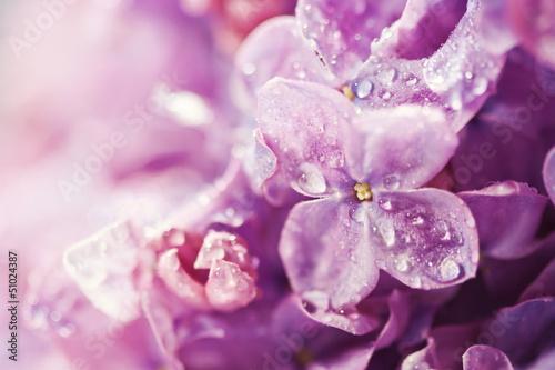 Lilac flowers background © komar.maria