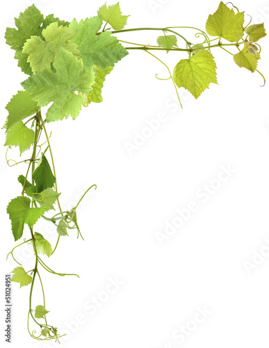 coin de vigne