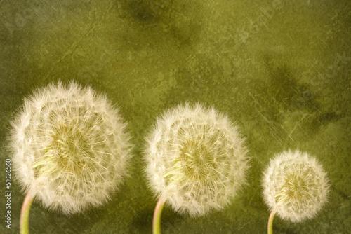 Dandelion Heads