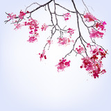 Spring Blooming Sakura branch of blots background